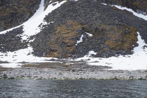 Polar bear on trash beach.jpg