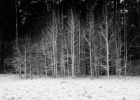 photo_trees_black_and_white_snow_winter_1231789771